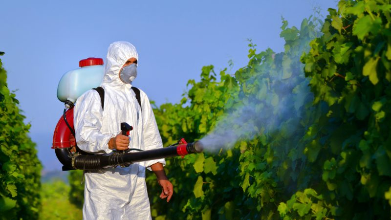 Pest Kontrol